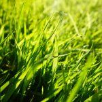 grass-2944182_1920-2